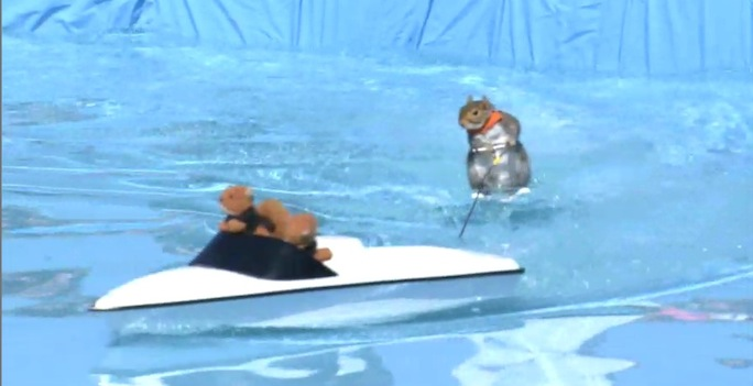 Squirrel skiin water skiing