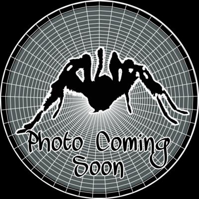 imagecomingsoon.png