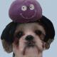 Badwrong