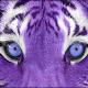 Purpletiger