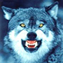 FocusedWolf