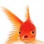 BobTheFish