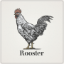 Rooster_800