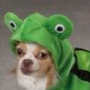 Froggo_Doggo