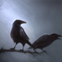 Muninn_Crow