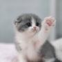 Cat_Gamer33