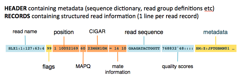 SAM / BAM / CRAM - Mapped sequence data formats — GATK-Forum