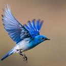 Bluebird777