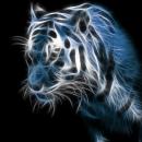 Galactic-Tiger