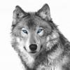 Justin Wolf