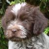 Jasperhound
