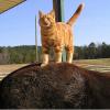 stablecat