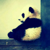 yi_Xu