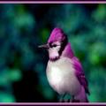 PurpleJ
