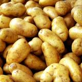 plainpotato