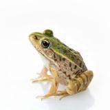 littlefroggy