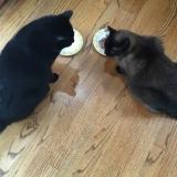 3girls3cats