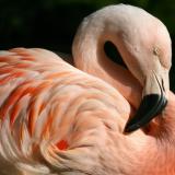 flamingocandy