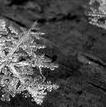 SnowCoveredSled