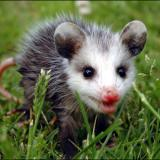 AwesomeOpossum