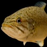 fishinglicense