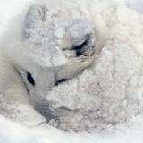 wolfmoon88