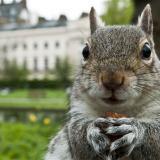 SadSquirrel23