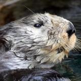 Mr. Otter