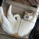 curiositycat333