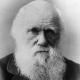 Darwin9