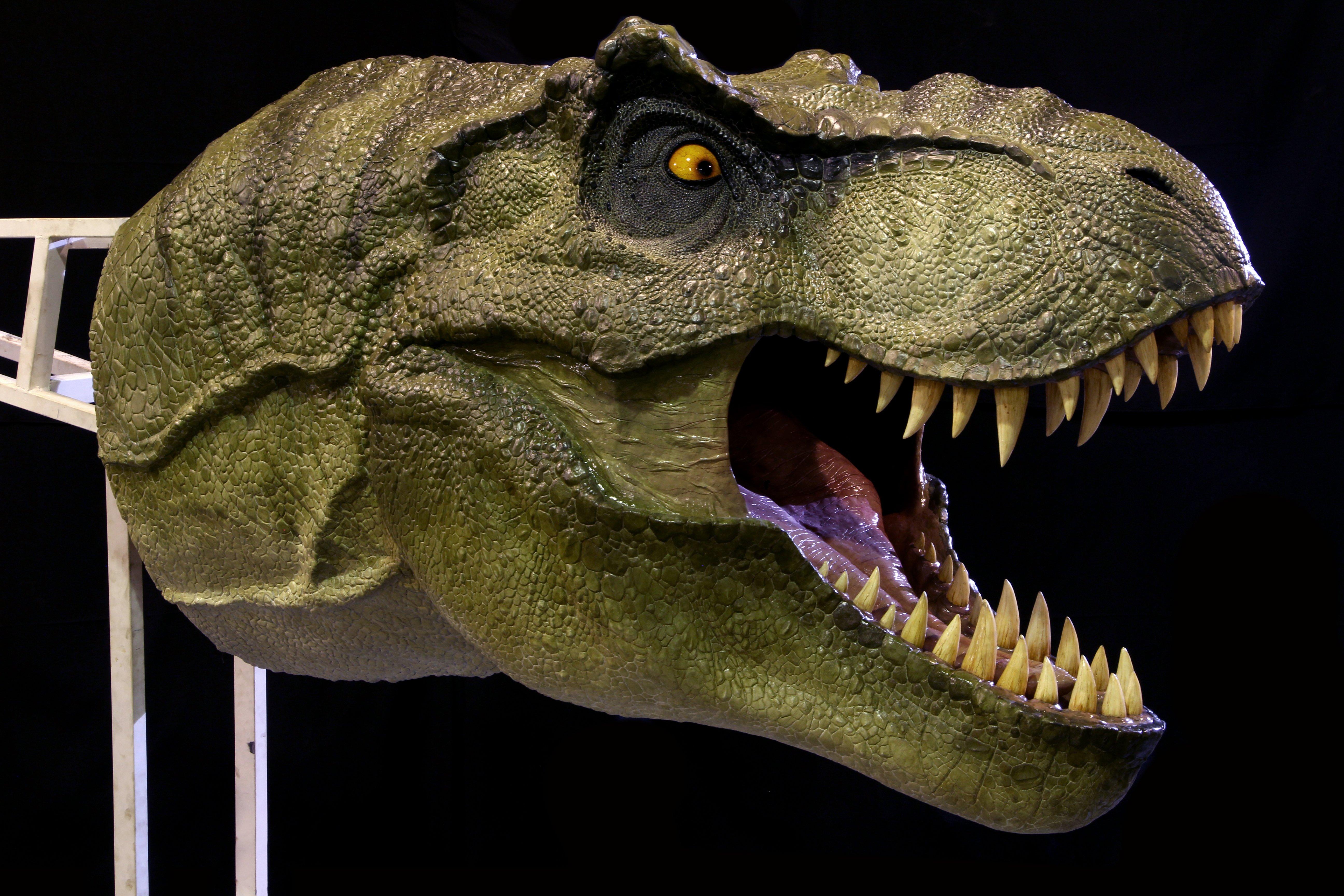 T-Rex Heads (1:1 scale) — Stan Winston School of Character ...