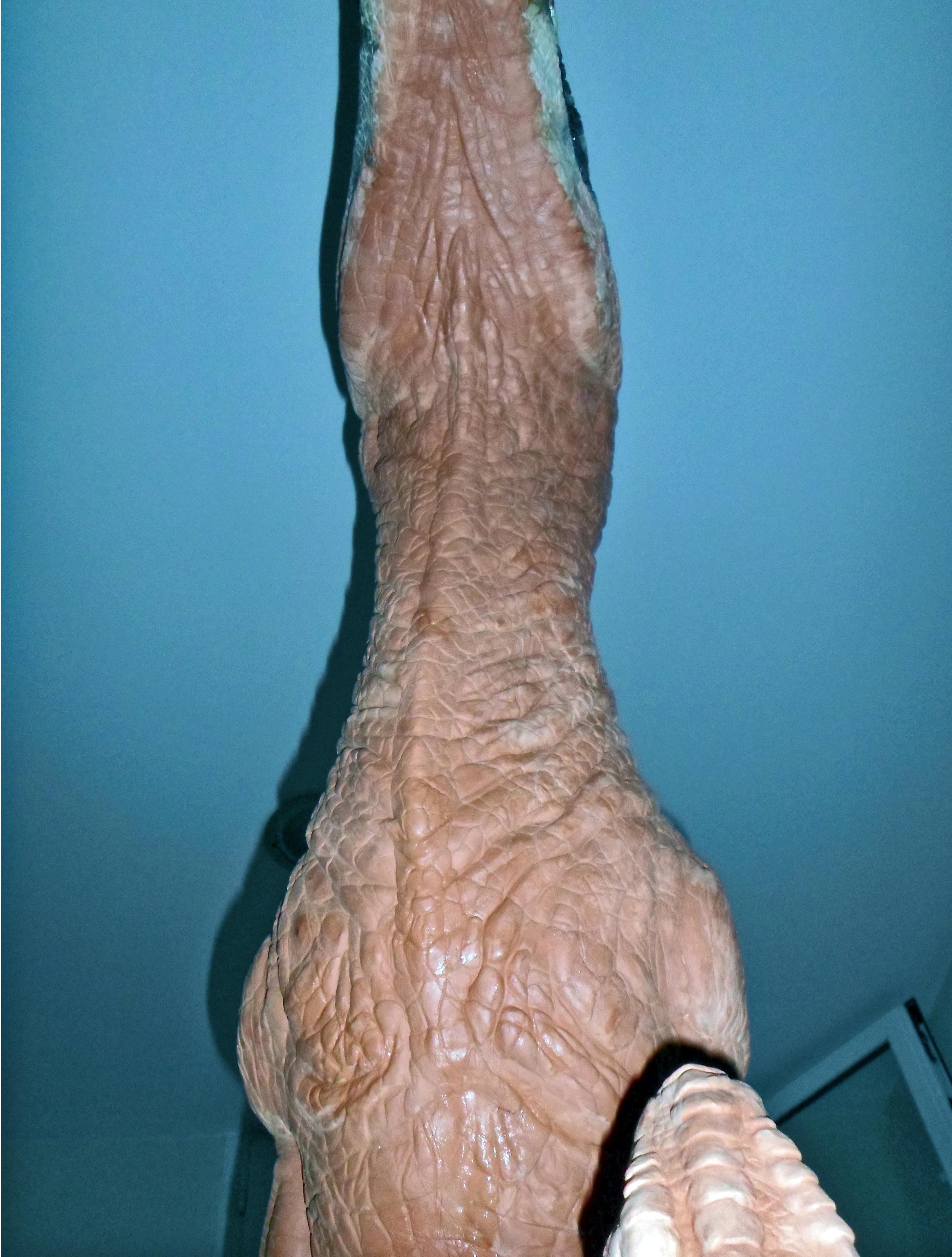 deinonychus sculpture by pheaston - photo #36