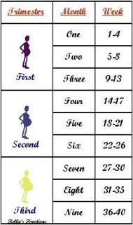 pregnancy trimesters chart: 2nd trimester ladies the bump