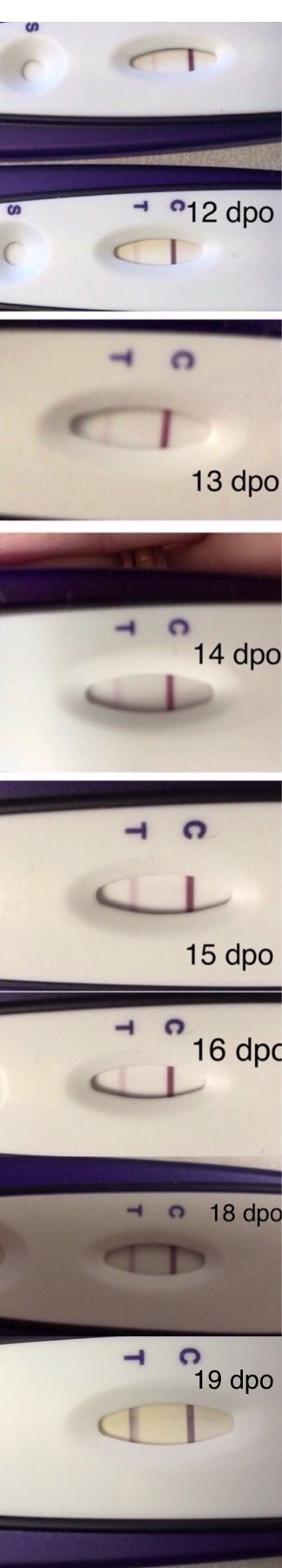 Low Beta 15dpo
