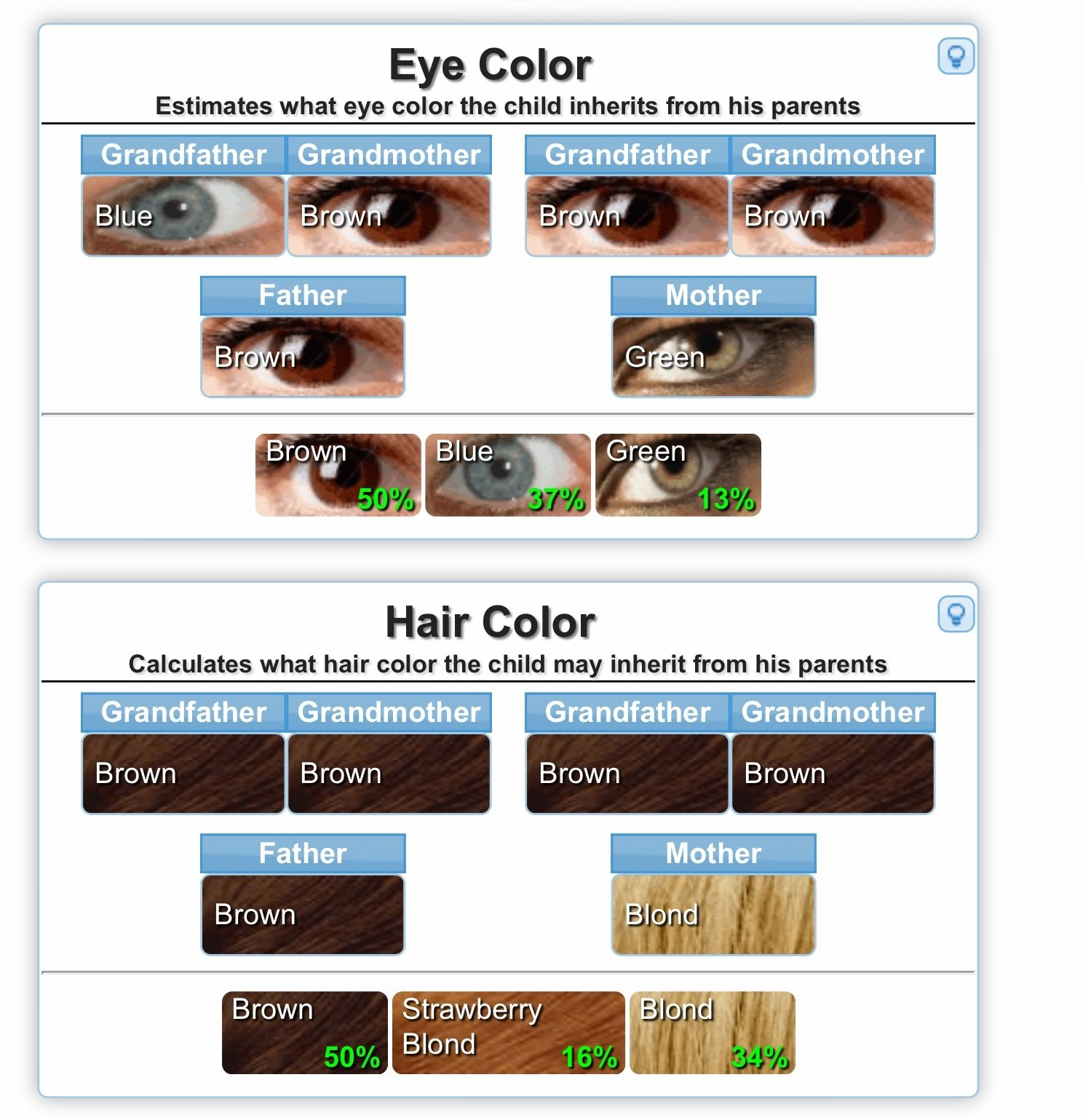 Genetics Calculator For Eye Color Etc The Bump