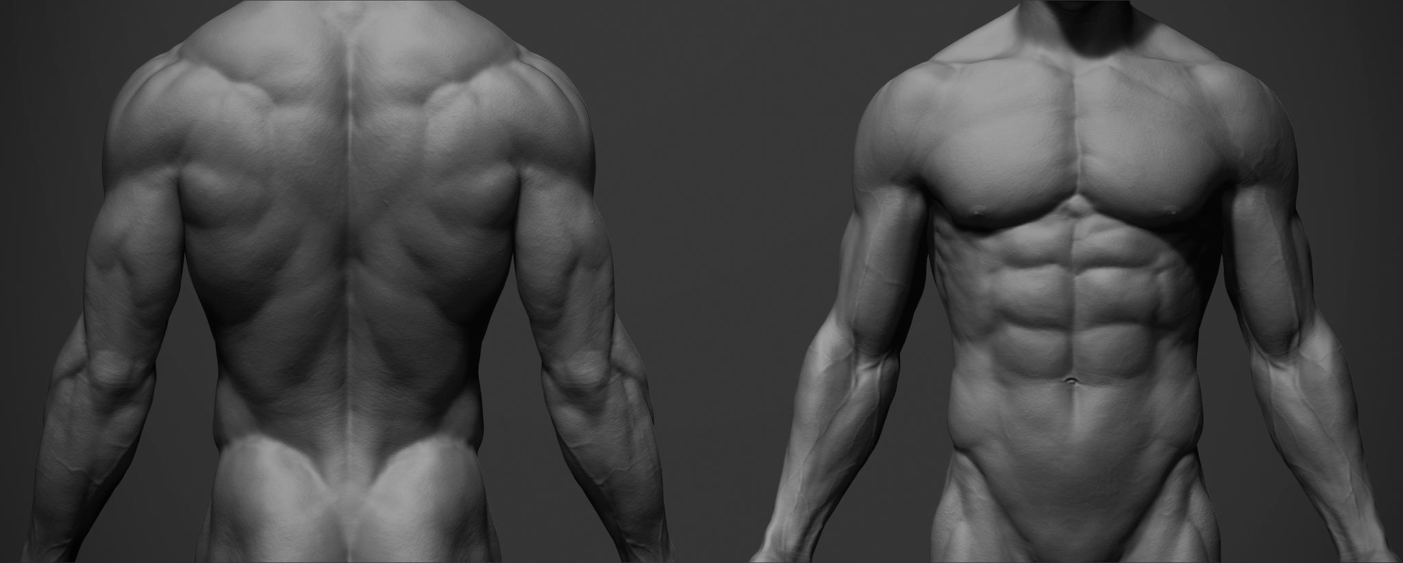 Male Anatomy Reference — polycount