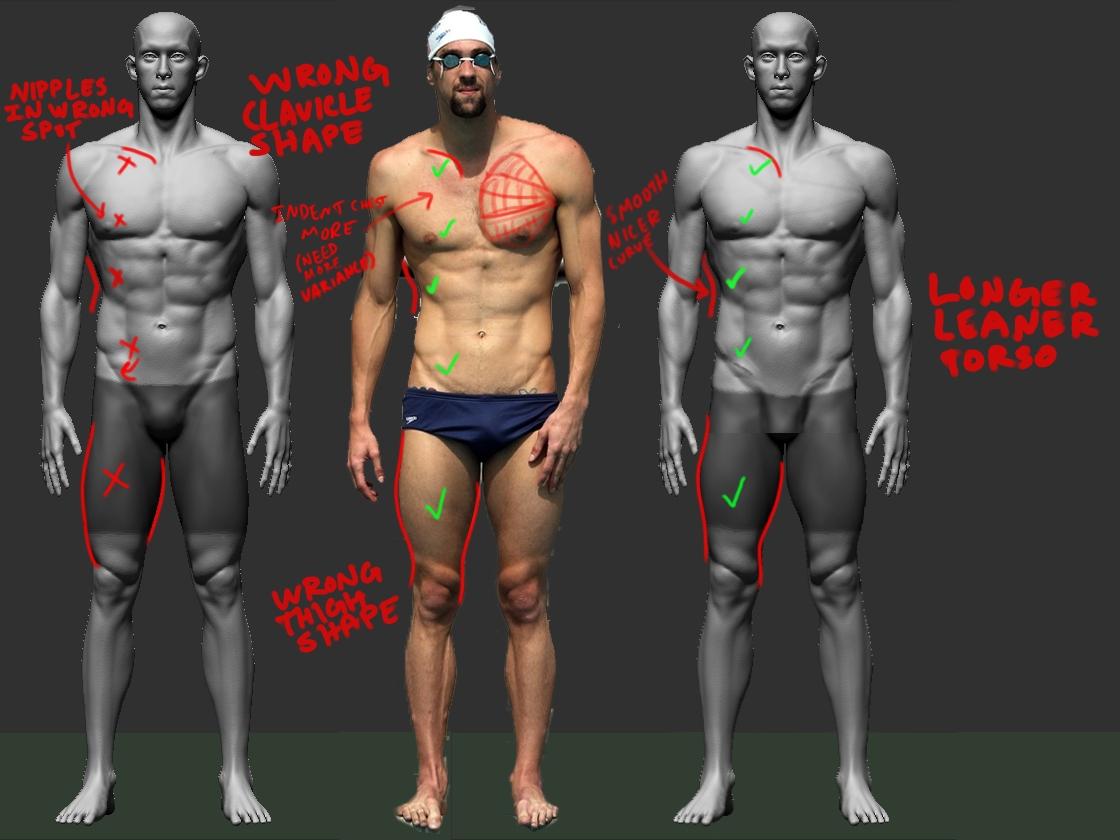 Michael Phelps Anatomy Images - human anatomy diagram organs