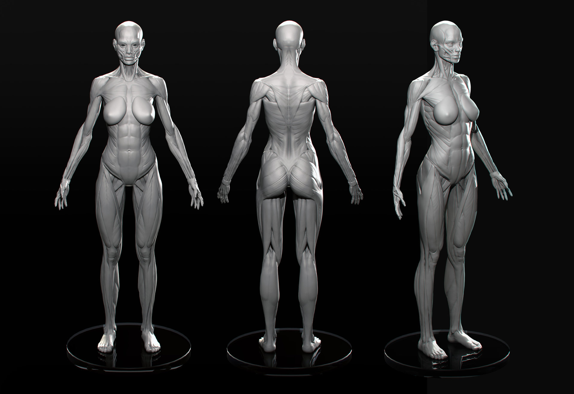 Female anatomy practice — polycount