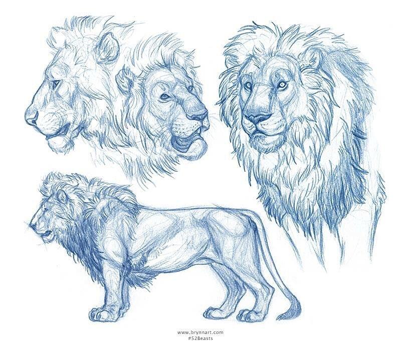 Populaire WIP] Lion sculpt :D — polycount ID23