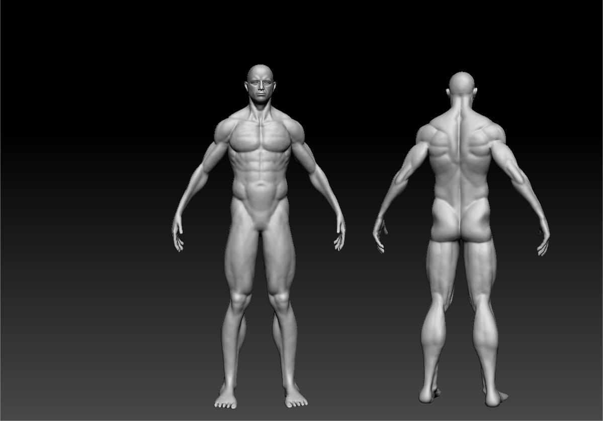 Male Character Anatomy Critique — polycount