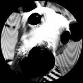 SnapdogStudios