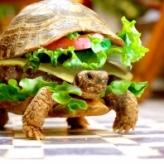 i_like_turtles
