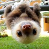 Sloth_42