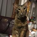 Harrycat