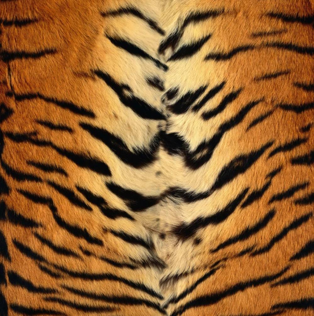 A Realistic Tiger Fur Pattern — K2Forums.com - photo#1