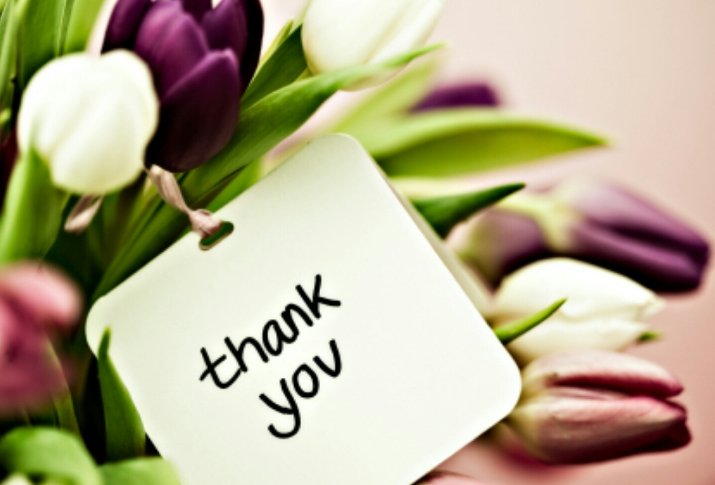 Tulips With Thank You Card Photo SpiderPic Royalty Free Stock Photos
