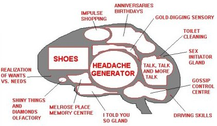 female-brain.jpg