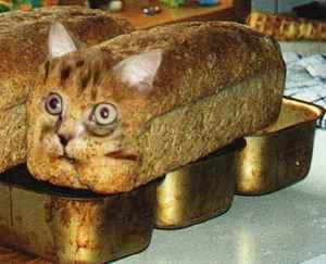 cat hassock.jpg