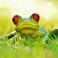 tropicalfrog