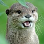 OtterlyRidiculous